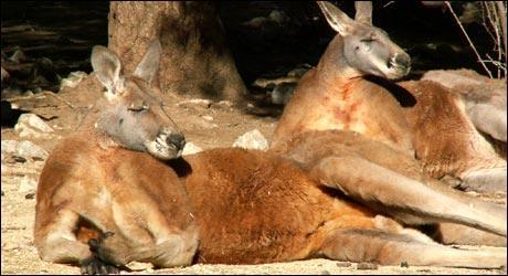 Parc zoologique de lunaret tourisme montpellier h rault for Parc zoologique 78